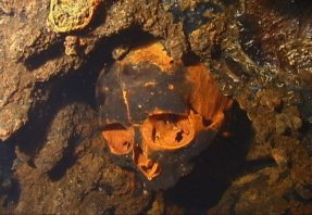 Japanese engineers skull fused into the bulkhead from an explosion